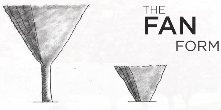 THE  FAN  FORM