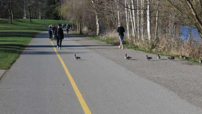 Share the path for wigeon