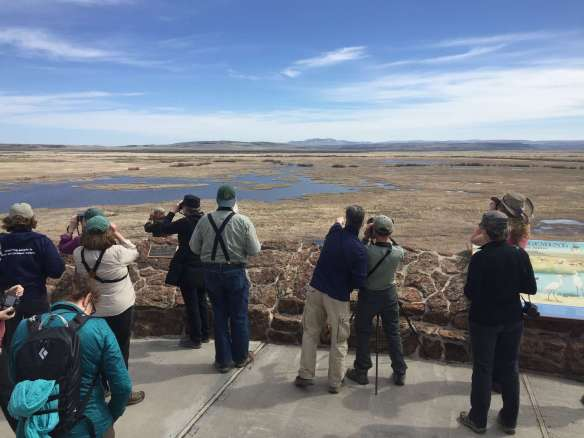 Birders at Buena Vista Ponds Overlook