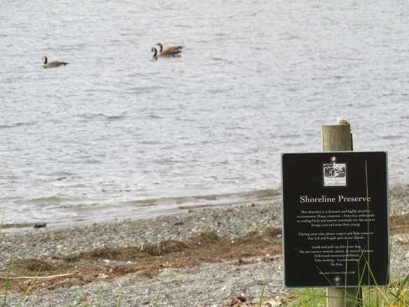 Shoreline Preserve