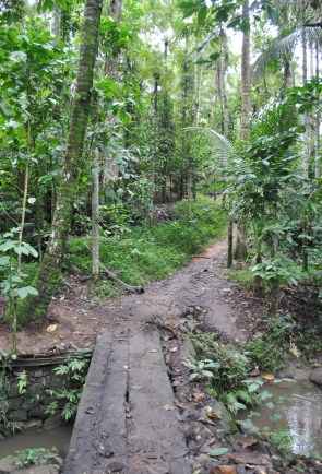 Spice Plantation trails, Thekkady - Kerala
