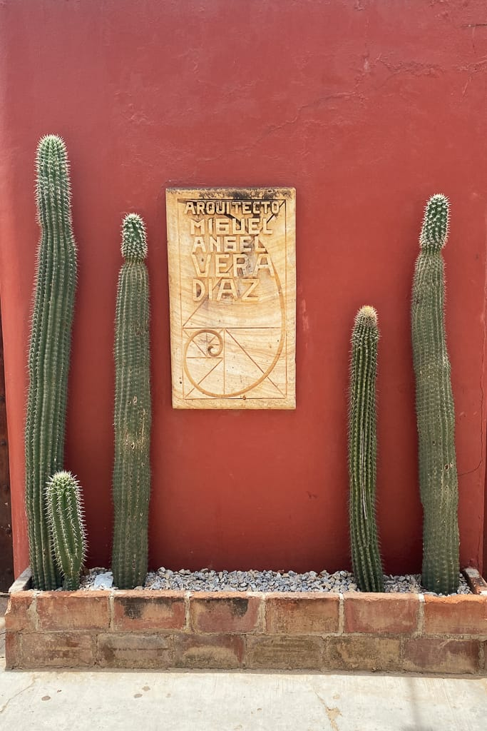cactus Oaxaca