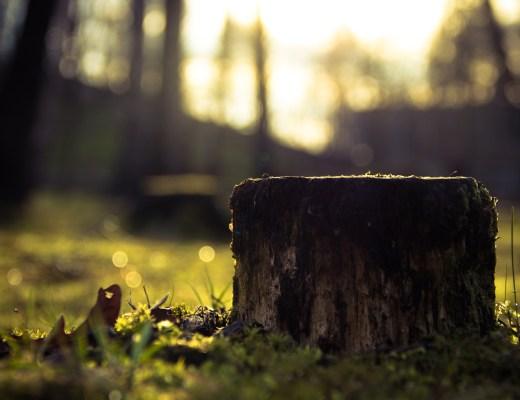 grief tree stump