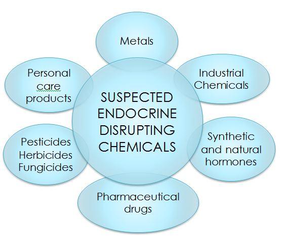 Understanding Endocrine Disruptors