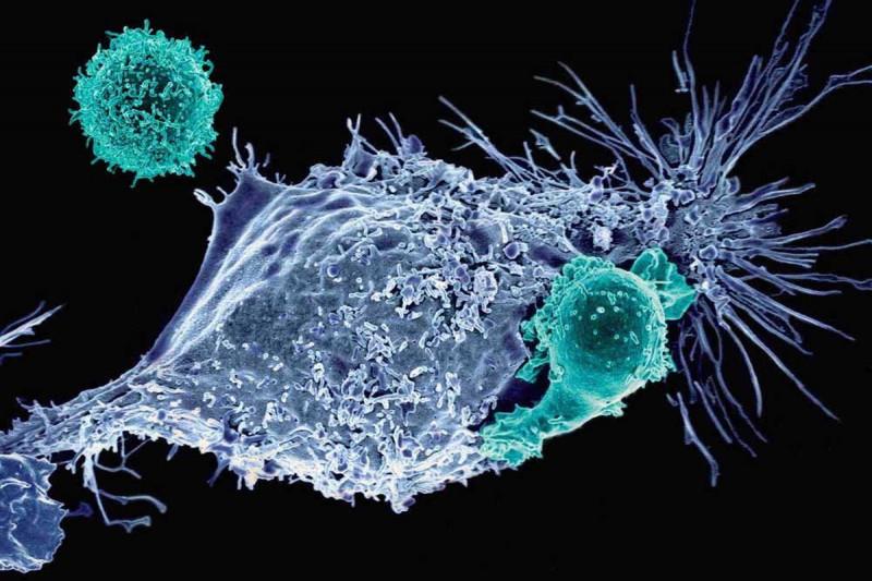 CRISPR Gene-Editing Tool May Help Improve Cancer Immunotherapy