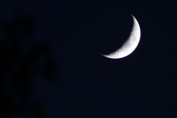 A crescent moon, with a bit of tree top