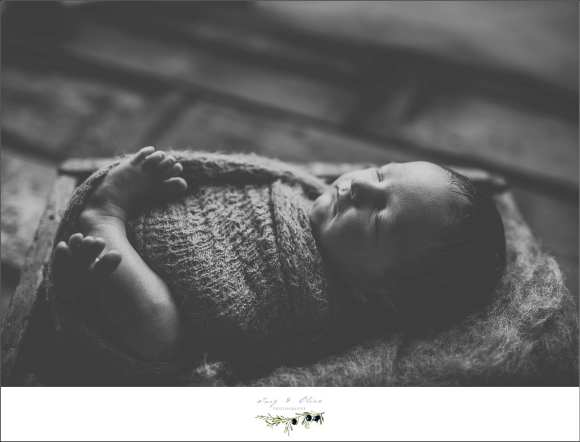 newborns, baskets, blankets, black and white, bonnets, swaddled, green blankets,  rustic, vintage, cherub, angelic, beautiful babies, miracles, bundles of joy, madison area newborn photography, newborns, babies, Twig and Olive photography