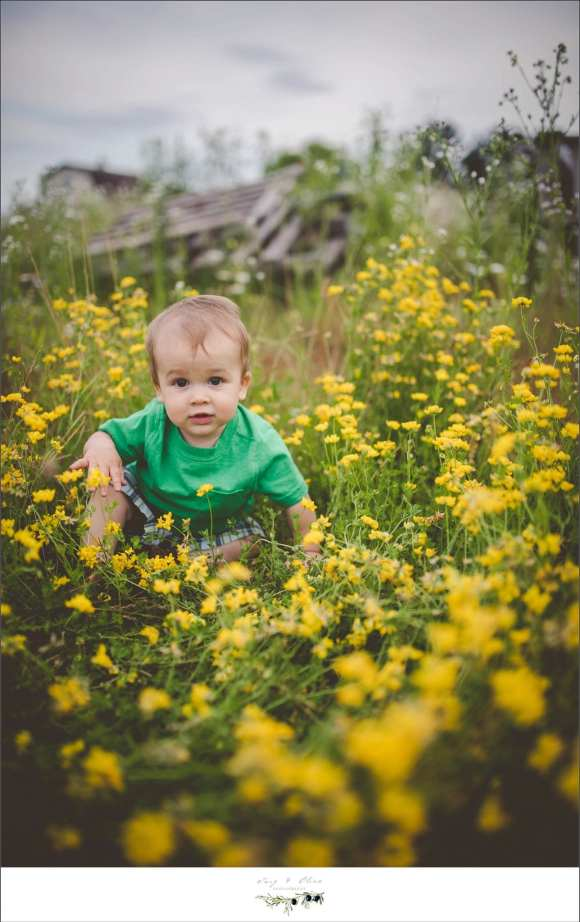 baby boy, yellow flowers, green grass, rustic barn