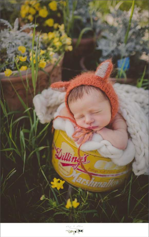 what did the fox say?, bonnets, baskets, buckets, swaddled, little hats, newborns