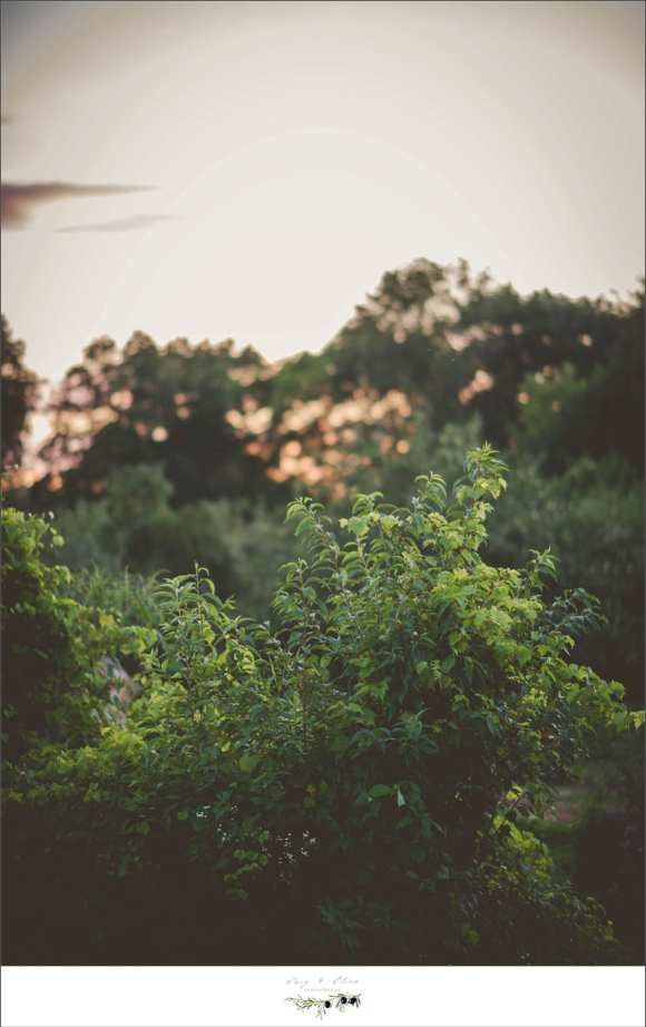 greenery, open fields, outdoor photography, maternity sessions
