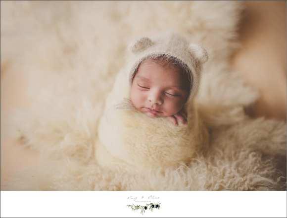 fuzzy little bear