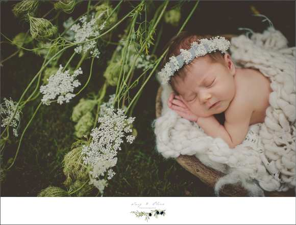 white flowers and blanket