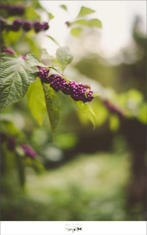 Florida purple flowers