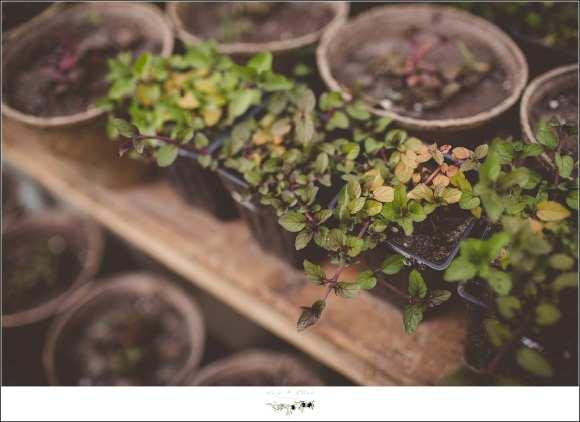 rustic outdoor planter