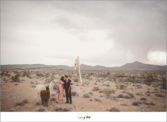 wppi desert shootout