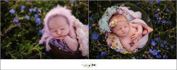 purple flowers newborn baby