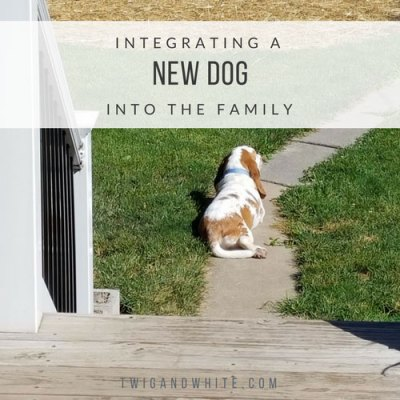 Integrating a New Dog Into the Family