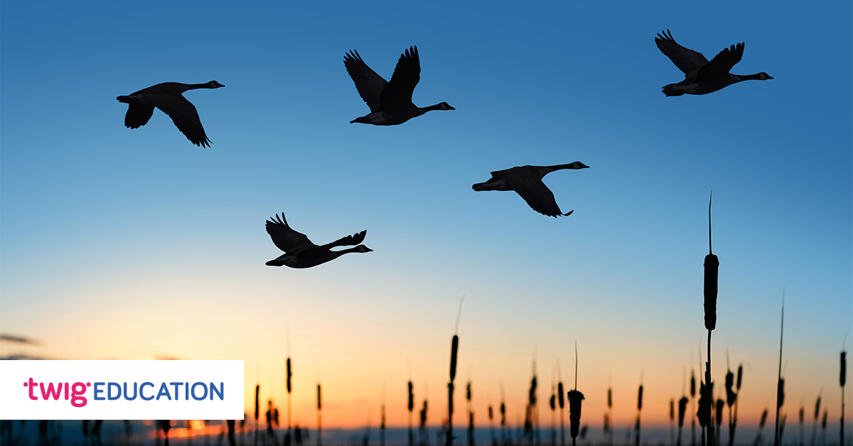 This image has an empty alt attribute; its file name is World-Migratory-Bird-Day.jpg