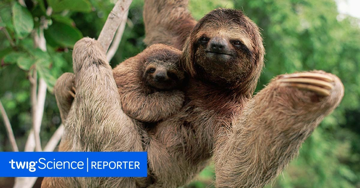 This image has an empty alt attribute; its file name is World-Sloth-Day.jpg