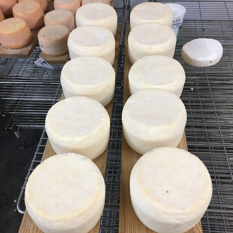 Washed Rind Cheeses in Process of Aging