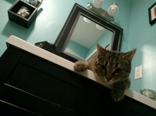 """Bruno """"You okay, Mama?"""" The bathroom sink became an instant favorite, and so did the toilet water. We keep that door shut now. Human supervision required."""