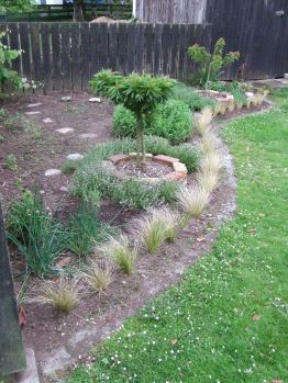 Carex albula now borders the whole Herb Garden. Hooray!
