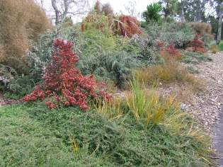 I love the form and colour of this native bed.
