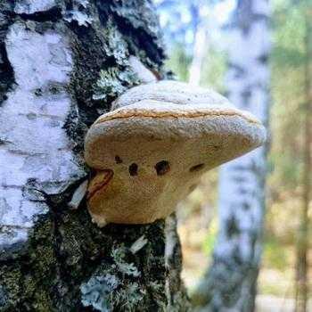 Жареные грибы на зиму в банках без стерилизации с фото ...