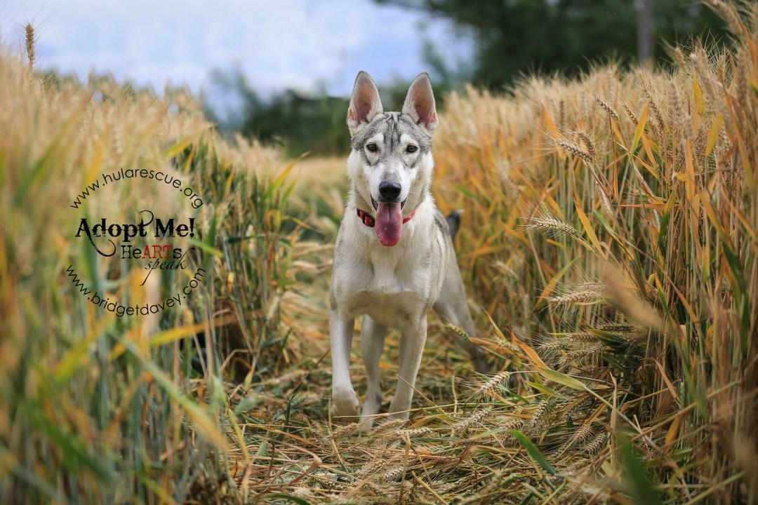 Cana - HULA - London Dog Photography Bedfordshire-72