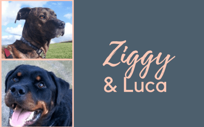 #SundayDogStories – Ziggy & Luca