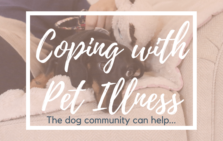 Coping with pet illness? The dog community can help