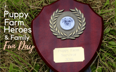 Puppy Farm Survivors, Rescue Stories & so much more – DBARC Fun Day!
