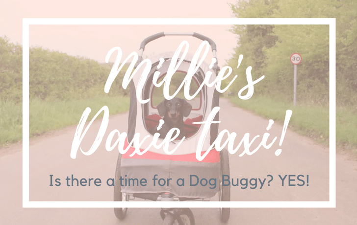Is there a time & a place for a dog buggy? Yes!