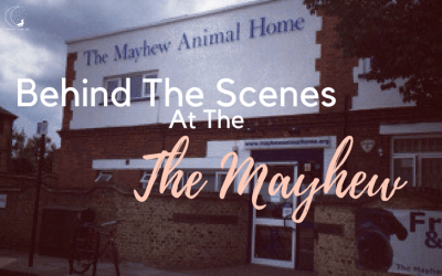 The Mayhew Animal Home – A hidden gem in London