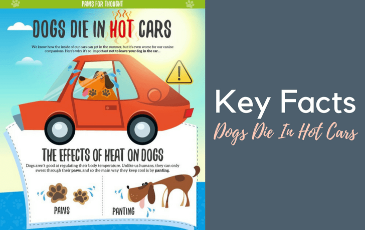 Keeping dogs safe this summer!
