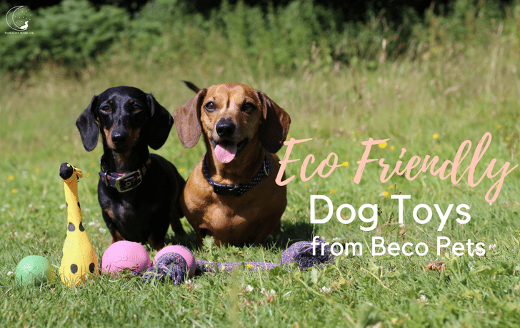 Beco Pets: An Eco-Friendly Brand For Your Dog