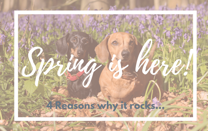 4 Reasons why Spring is pawfect for fun with dogs