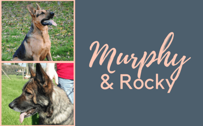 Could you adopt Murphy or Rockie?