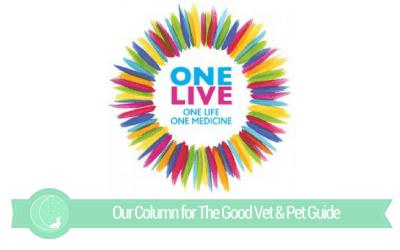 The Good Vet & Pet Guide  (ONE LIVE Festival)