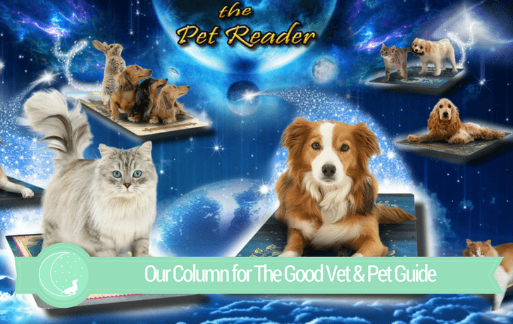 The Good Vet & Pet Guide (Pet Tarot Reading with The Pet Reader)