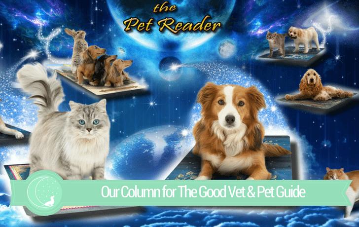 The Good Vet & Pet Guide (Pet Tarot Reading with The Pet Reader)