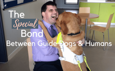 Guide Dogs: From Puppies to Heroes (Part Two)