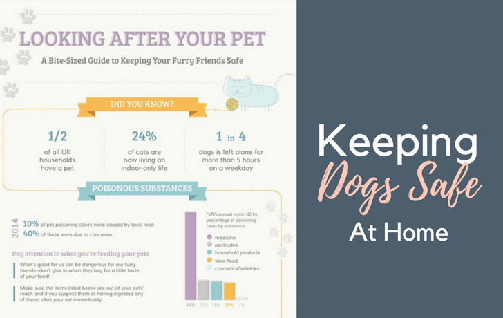 Tips for looking after your pet – With Wayfair