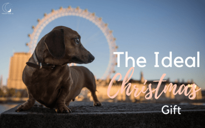Why A Photoshoot With Your Dog Makes The Perfect Christmas Gift!