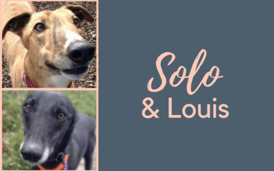 #SundayDogStories – Solo & Louis
