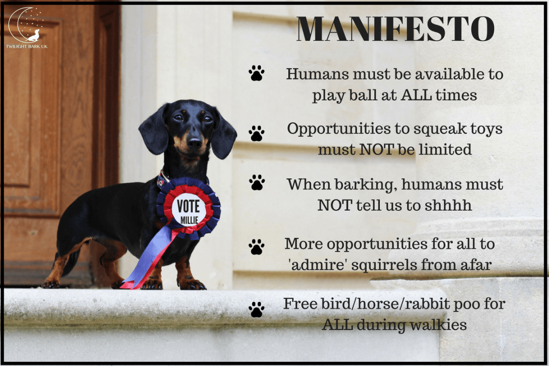 General Election Dog Manifesto by Millie the Dachshund