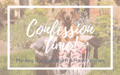 Confession Time! My Dog Is A Sock Thief…