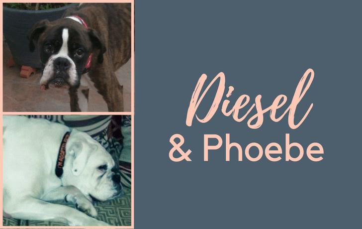 #SundayDogStories – Diesel & Phoebe