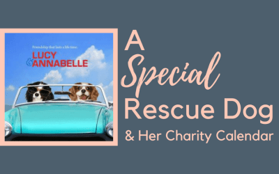 Lucy The Rescue Cavalier: Raising Funds for Charity