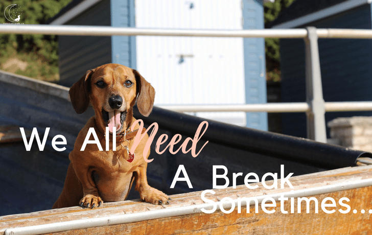 Sometimes all you need is your dog…